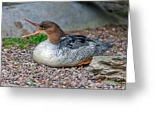 Scaly-sided Merganser Hen Greeting Card