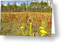 Schnell's Pitcher Plant Greeting Card