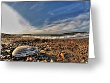 Sea Shell Sea Shell By The Sea Shore At Presque Isle State Park Series Greeting Card