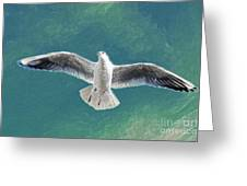 10427 Seagull In Flight Greeting Card