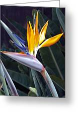 Seaport Bird Of Paradise Greeting Card
