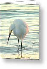 Searching For Supper Greeting Card
