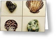 Seashell Composite Greeting Card