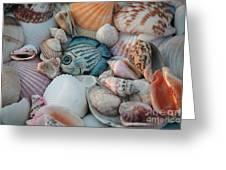 Seashells And Blue Fish Greeting Card