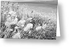 Seaside Grass Greeting Card