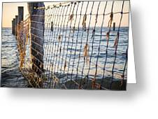 Seaside Nets Greeting Card