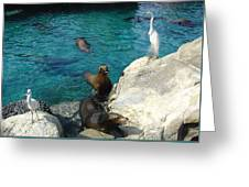 Seaworld Sea Lions Greeting Card