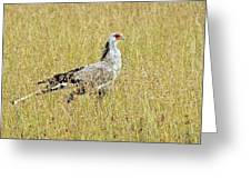 Secretary Bird Greeting Card