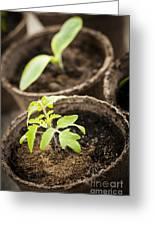 Seedlings  Greeting Card by Elena Elisseeva