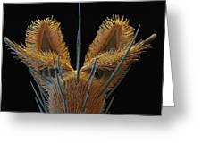 Sem Of Stable Fly Foot Greeting Card