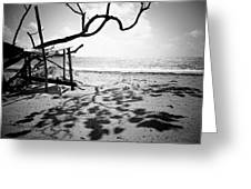 Shadow Tree Greeting Card