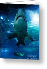 Shark Silhouette Underwater Greeting Card