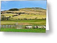 Sheep In Meadow Greeting Card
