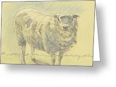 Sheep Sketch Greeting Card