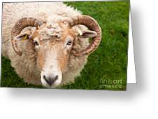 Sheep With Horns Greeting Card