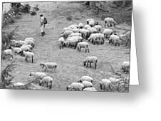 Shepherd With Sheep  Greeting Card