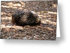 Short-beaked Echidna Greeting Card