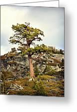 Sierra Landscape Greeting Card