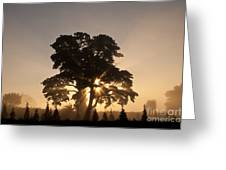 Silhouetted Tree With Sun Rays Greeting Card