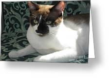 Silktapestrycatstm Greeting Card