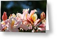 Simply Vibrant Greeting Card