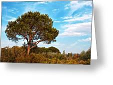 Single Pine Tree Against Blue Autumn Sky Greeting Card