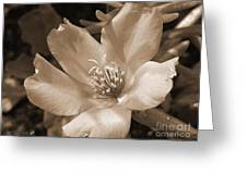 Single Portulaca Greeting Card
