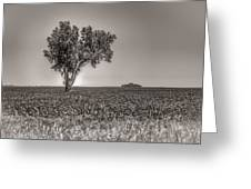 Single Tree In The Bean Field Greeting Card