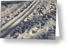 Ski Track In Sunlight Greeting Card