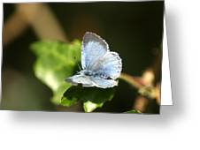 Small Blue Butterfly Greeting Card