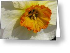 Small-cupped Daffodil Named Barrett Browning Greeting Card