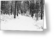 Small Road In A Snowy Forest Greeting Card