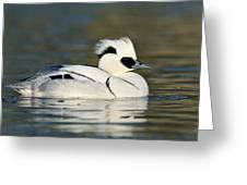 Smew Greeting Card
