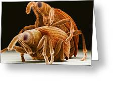Snout Beetles Greeting Card