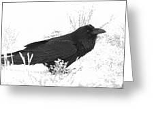 Snow Raven Greeting Card