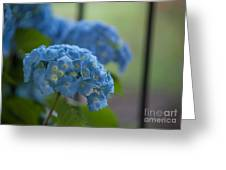 Soft Blue Hydrangea Greeting Card