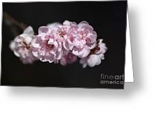 Soft Pink Blossom Greeting Card