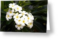 Soft Plumeria Greeting Card