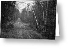 Solitude Forest Greeting Card