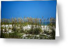 Sowing Wild Oats Greeting Card