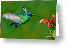 Sparkling Violetear Greeting Card