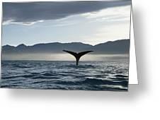 Sperm Whale Physeter Macrocephalus Greeting Card