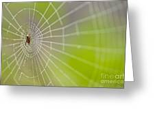 Spider Web With Dew Drops With Spider On Web Greeting Card