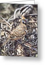 Spinifex Pigeon Greeting Card