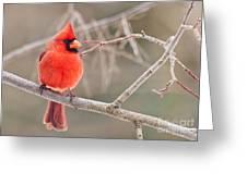 Splash Of Red Greeting Card