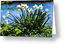 Spring Daffodils. Park Keukenhof Greeting Card by Jenny Rainbow