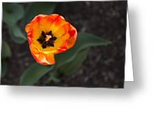 Spring Flowers No. 10 Greeting Card