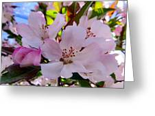 Spring Form Greeting Card
