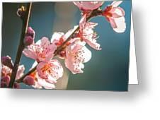 Spring Peach Tree Blossom Greeting Card