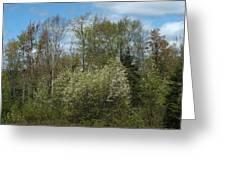 Spring Renewal Greeting Card